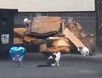 O gato senta em frente a gata para lhe entregar o balão. (Foto: Reprodução Youtube/Luis Lizama)