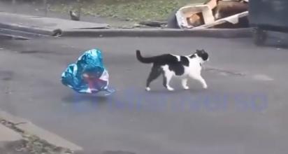 O gato encontra um balão azul no formato de um coração para entregar para sua parceira. (Foto: Reprodução Youtube/Luis Lizama)