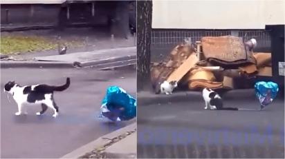 Gato encontra balão e resolve presentear a sua parceira. (Foto: Reprodução Youtube/Luis Lizama)