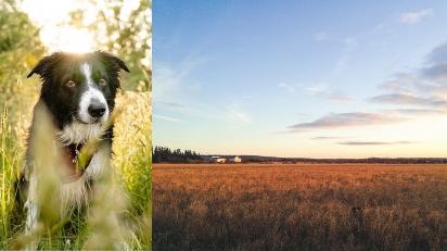 Fotógrafo viraliza ao clicar seu border collie em diferentes cenas para público o encontrar. (Foto: Instagram/andrewknapp)