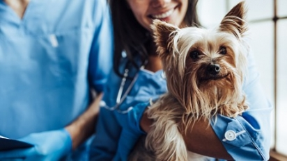 Se o cão apresenta algum dos sinais clínicos deve ser levado imediatamente ao veterinário. (Foto: Divulgação/Purina)