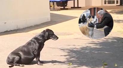Cachorrinho aguarda na porta de hospital o dono que morreu há 7 anos