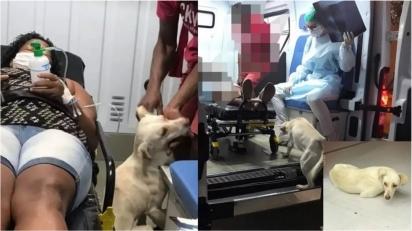 Cachorro leal acompanha dona com covid-19 em ambulância e a espera em porta de hospital (Foto: Reprodução Instagram / enf.vanessaguiar)