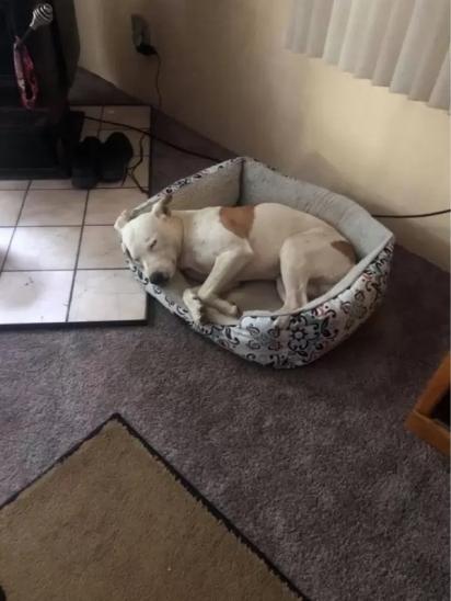 Depois do susto, o cão, com a ajuda do centro de resgate, encontrou seu dono. (Foto: Facebook / Haven Humane Society)