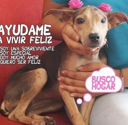 Cartaz de adoção da pequena Dulce. (Foto: Instagram / vetsupermascotas)