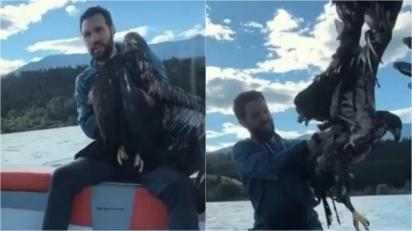 Durante passeio de barco, homem salva águia-careca que estava se afogando. (Foto: Reprodução  Youtube / Feed in mind)