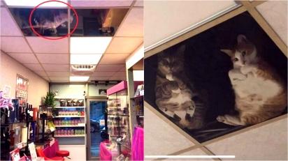 Comerciante coloca teto de vidro para que seus gatos possam observá-lo do alto. (Foto: Twitter/@SCMcrocodile)