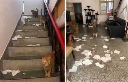 Além de monitorar o dono, os gatos também gostam de bagunçar o recinto de casa. (Foto: Twitter/@SCMcrocodile)