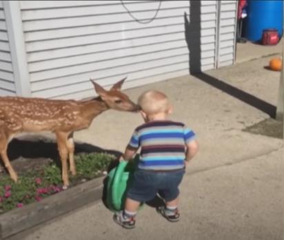 A criança se aproxima para pegar o regador e o cervo aproveita para fazer um carinho na sua cabeça. (Foto: Reprodução Youtube/Waggle TV)