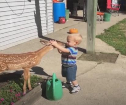A criança interage com o cervo acariciando a sua cabeça. (Foto: Reprodução Youtube/ Waggle TV)