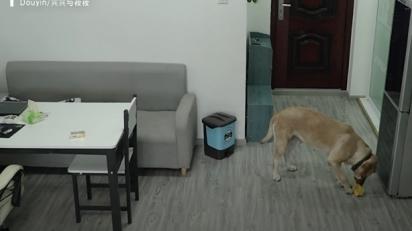 O labrador abre a porta da geladeira para pegar o pote de sorvete. (Foto: Reprodução Youtube/South China Morning Post)
