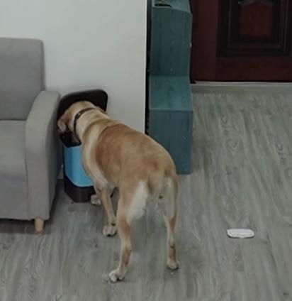 Depois de lamber todo o pote, o cão coloca as embalagens no lixo. (Foto: Reprodução Youtube/South China Morning Post)