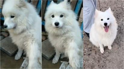 Homem salva cachorro de comércio de carne na China. (Foto: TikTok/Douyin 143879)