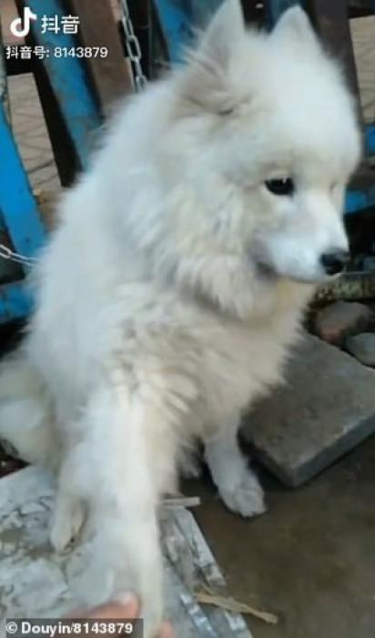 O cão foi encontrado amarrado ao lado de fora do estabelecimento de comércio de carne na China. (Foto: TikTok/Douyin 143879)