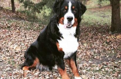 A cachorrinha Berkley sempre muito amorosa. (Foto: Arquivo Pessoal/Christine Jo Miller)