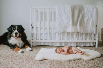 A cachorrinha Berkley com a sua irmã Elainey. (Foto: Arquivo Pessoal/Christine Jo Miller)