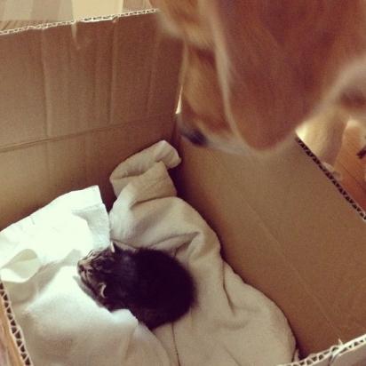 Ponzu conheceu a  Ichimi ainda filhote. (Foto: Instagram/shimejiwasabi)