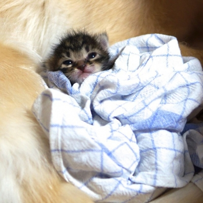 A gatinha Ichimi foi rejeitada pela mãe ainda filhote. (Foto: Instagram/shimejiwasabi)