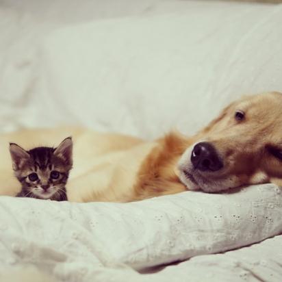 A gatinha não ficou com medo do enorme cachorro. (Foto: Instagram/shimejiwasabi)