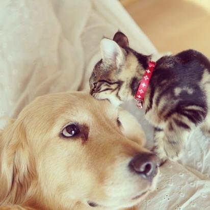 Ponzu sempre foi apaixonado por gatos. (Foto: Instagram/shimejiwasabi)