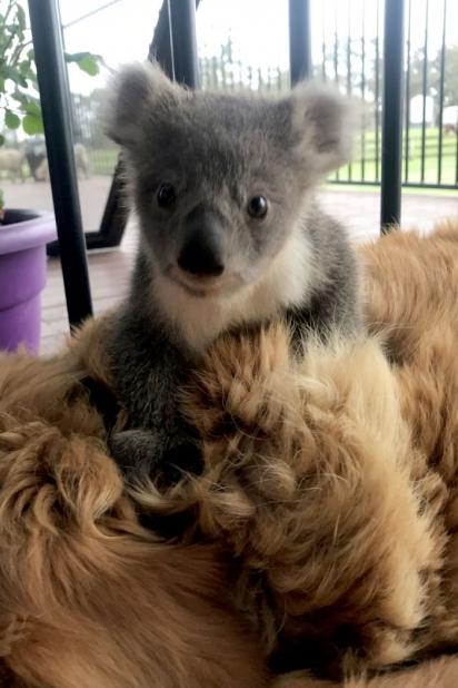 Joey se agarrou nas costas de Asha não querendo mais soltar. (Foto: Arquivo Pessoal/Kerry McKinnon)