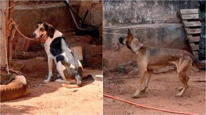 Homem é multado pelo crime de maus-tratos contra 39 cães. (Foto: Reprodução/TV TEM)