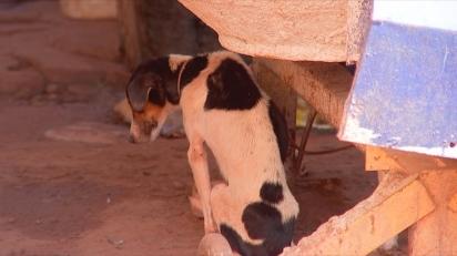 Os cães estavam sob posse do homem desnutridos e doentes. (Foto: Reprodução/TV TEM)