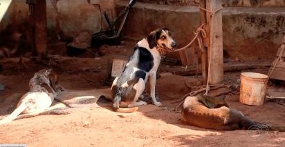 Os cães foram levados para uma clínica veterinária para serem examinados e posteriormente serão encaminhados para um abrigo de animais. (Foto: Reprodução/TV TEM)