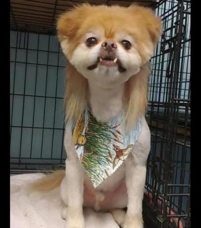 O cachorrinho do Chitãozinho & Xororó. (Foto: Instagram/cassiissassy1389)