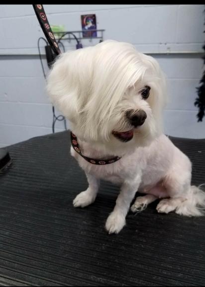 Pedi o corte de cabelo do tipo posso falar com seu gerente. (Foto: r / aww / HopHeadRed34)