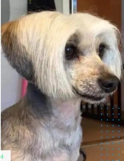 Todo mundo já teve uma professora com esse corte de cabelo! (Foto: Imgur/kchristine8824)