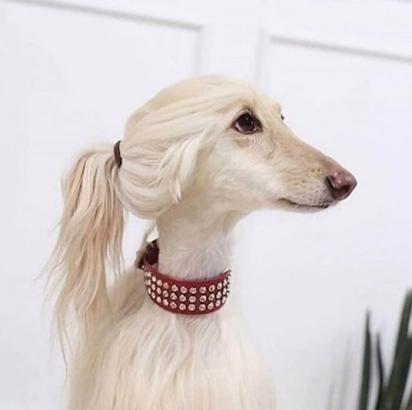 """O cachorro está usando o visual """"Eu sou muito rico para me preocupar com o estilo do meu cabelo"""". (Foto: Instagram/parisbeautypro)"""