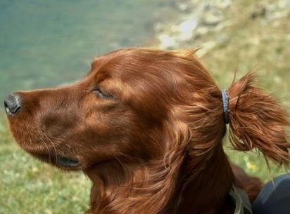 Este cachorro parece que acabou de estender sua esteira de ioga na praia e está tomando um pouco de vitamina D. (Foto: Instagram/tomojo.co)