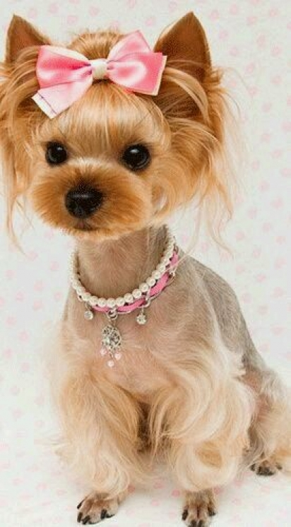 É uma princesa? (Foto: Facebook/Peluquería Canina Cris)