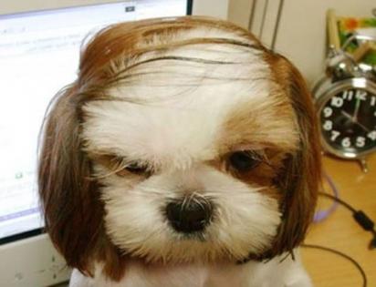 O melhor penteado para representar aquele momento de calvície. (Foto: r / aww / EducationalSir)