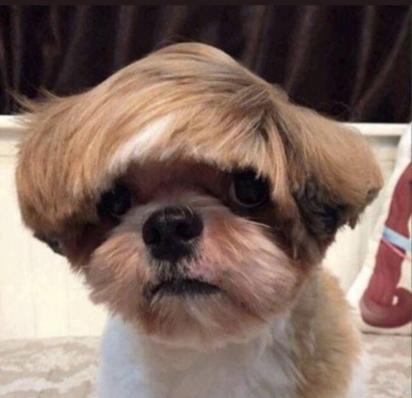 Bieber dog. (Foto: Twiiter/@mattcoyney)