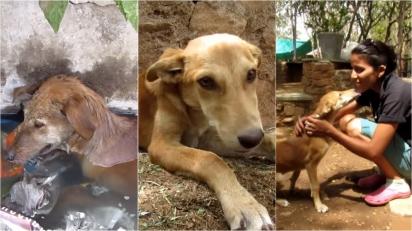 Voluntários resgatam cachorrinha em córrego contaminado. (Foto: Reprodução Youtube/Animal Aid Unlimited, India)