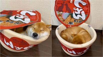 Dono cria caminhas inspiradas em lanches para seu cão Shiba Inu dormir. (Foto: Twitter/ @n0qTVdKQKf4r0Qt)