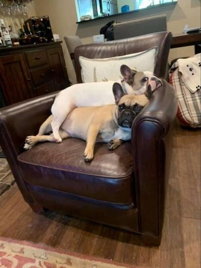 As cachorrinhas também gostam da cadeira do papai. (Foto: Arquivo Pessoal/Jennifer Lewis)