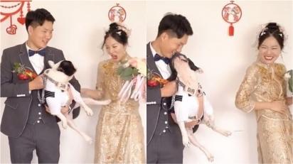 Buldogue francês chuta noiva durante fotos de casamento. (Foto: Reprodução TikTok/Douyin 383336107)