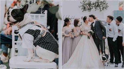 O casamento foi lindo e San Jiu se comportou muito bem durante a cerimônia. (Foto: Reprodução TikTok/Douyin 383336107)