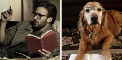 Chris Evans e golden retriever de óculos de grau e um livro. (Foto: Twitter/@retrievans)