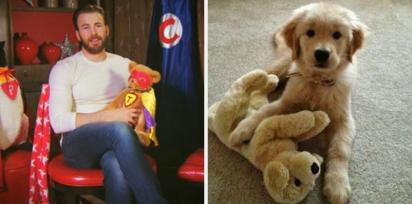 Chris Evans e golden retriever com ursinho de pelúcia. (Foto: Twitter/@retrievans)