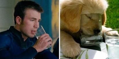 Chris Evans e golden retriever bebendo um copo d água. (Foto: Twitter/@retrievans)