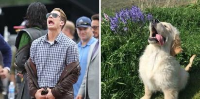 Chris Evans e golden retriever olhando para o alto com a língua de fora. (Foto: Twitter/@retrievans)