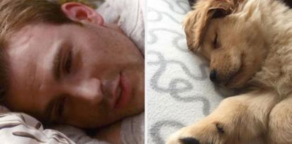 Chris Evans e golden retriever sonolentos. (Foto: Twitter/@retrievans)