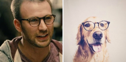 Chris Evans e golden retriever de óculos de grau. (Foto: Twitter/@retrievans)