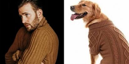 Chris Evans e golden retriever de suéter marrom. (Foto: Twitter/@retrievans)