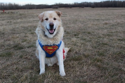 Agora Kai se tornou um cão terapeuta. (Foto: Facebook/This is Kai)