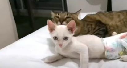 O gatinho foi abandonado debaixo de um carro estacionado. (Foto: Reprodução Youtube/Noticias Caracol)